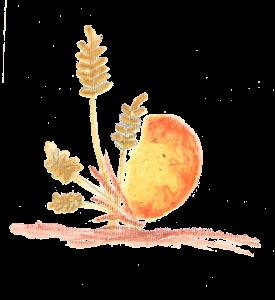 frutti in pienezza