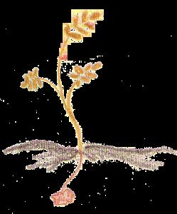 seme che cade in terra buona