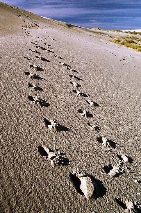 orme-sulla-sabbia